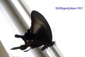 校舎に迷い込んだ蝶
