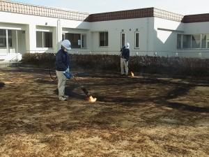 中庭の芝を灯油バーナーで焼きました。