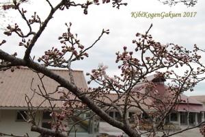 桜坂開花宣言(4/6)