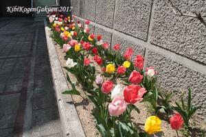 学校中庭下花壇(4/22)