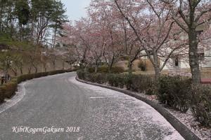 桜坂-IMG_3116-E1C