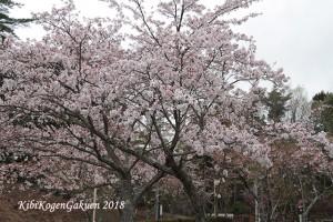 桜坂-IMG_3136-E1C