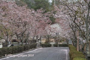 桜坂-IMG_3139-E1C