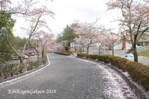 桜坂-IMG_3146-E1C