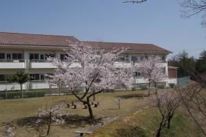 女子寮南側の桜より。